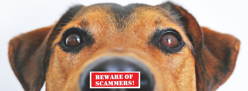 Are You Being Scammed by Online Emotional Support Animal Companies?
